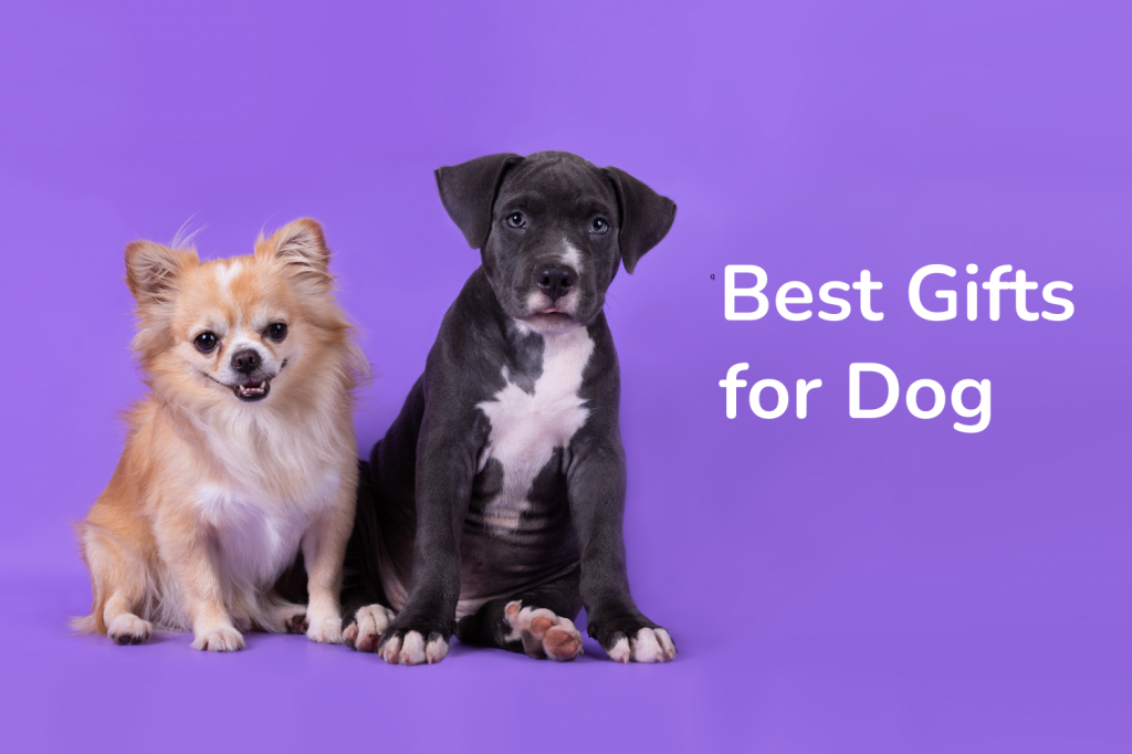 Best Gifts for Dog1